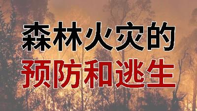 国晋消防-小知识科普之森林火灾的预防与逃生
